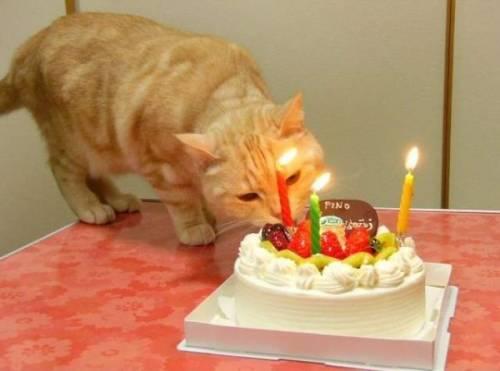 Смешные вопросы на день рождения