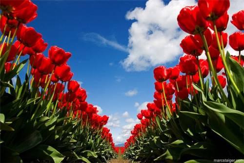 Поздравление стихи ураза байрам на татарском